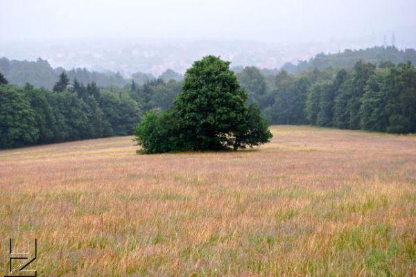 goslar-steinberg-0811-398238FC62DE-9A8E-7890-8741-6C3826B6C913.jpg